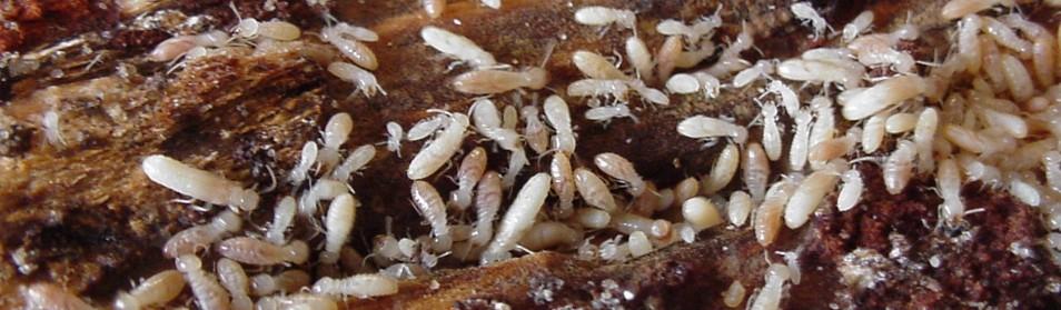 ctba_groupe_termite2